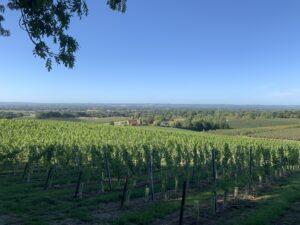 rural policy group vinyard 2