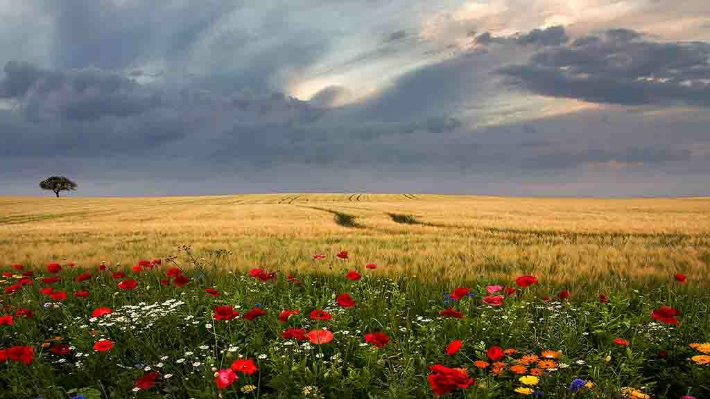 landscape wildflowers
