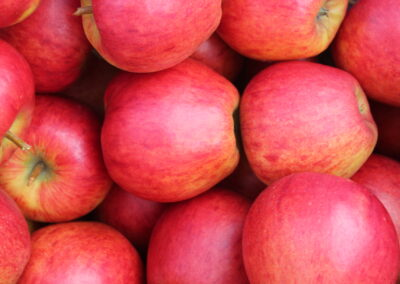 National Fruit Show Live 2020: British Produce Futures